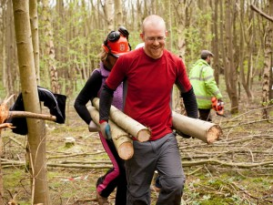 The National Forest, community tree felling