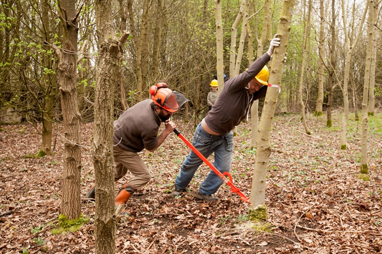 National_Forest_Tree_Felling__0011