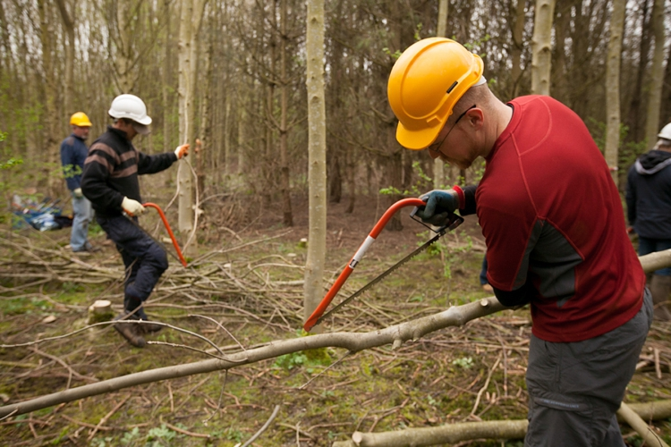 National_Forest_Tree_Felling__0016